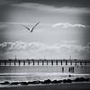 Whiterock (. Jianwei .) Tags: bridge sea bird silhouette vancouver seagull sony whiterock a500 jianwei kemily