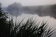 Im Nebel - Alte Sorge; Stapelholm, Fünfmühlen (17) (Chironius) Tags: stapelholm schleswigholstein deutschland germany allemagne alemania germania германия niemcy meggerdorf nebel morgendämmerung morgengrauen утро morgen morning dawn matin aube mattina alba ochtend dageraad рассвет amanecer wasserspiegel sorge fluss river rivière rio поток fiume stream wasser fog brouillard niebla