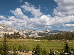 Sunrise High Sierra Camp sits on the side of a mountain overlooking this meadow. (alicecahill) Tags: california vacation usa mountains nature nationalpark meadow yosemite backpack granite sierranevada alicecahill highsierracampstrip
