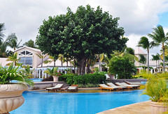 The Banyan tree by the Pool (littlestschnauzer) Tags: blue trees vacation holiday tree green beach pool hotel nikon holidays warm palm resort sugar vegetation unusual mauritius banyan tendrils 2013 d5000 wolmar