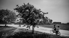 Bicycle Dream (arnabphotography) Tags: india tree bike bicycle rural village karnataka hampi monochome