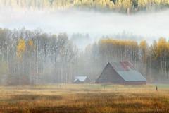 The Walking Dead (Blue Hour) Tags: trees color fall fog barn washington wa leavenworth tumwater