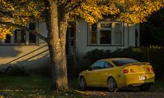 fAll in yellow! (kalpurush :)) Tags: life travel autumn light house tree fall nature beautiful car yellow vancouver season flickr sony victoria a77 yellew kalpurush sonya77