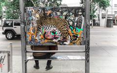 leopardo (*paz) Tags: graffiti leopardo calle colores pintura paradero santiagochile irarrazabal