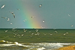 RAINBOW AND SEAGULLS...:BERNIÈRES SUR MER NORMANDY-FRANCE 2013 (IF YOU ARE INTERESTED TO GET(Buy) A LIMITED PHOTO PAPER EDITION, ASK ME BY MAIL : fred.vignolles@orange.fr (fred.vignolles) Tags: ngc goldstaraward blinkagain