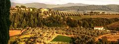 Buona Vista da Toscana (Elliott Bignell) Tags: italien italy landscape italia tuscany olives toscana cypresses italie toskana oliven zypressen montespertoli