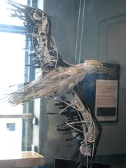 """Artwork in the Monterey Bay Aquarium • <a style=""""font-size:0.8em;"""" href=""""http://www.flickr.com/photos/109120354@N07/11042952136/"""" target=""""_blank"""">View on Flickr</a>"""