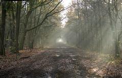 Zonnestralen in het bos bij Oirschot (ToJoLa) Tags: wood autumn sun canon herfst explore bos zon noordbrabant oirschot najaar ochtendzon 2013 canoneos60d