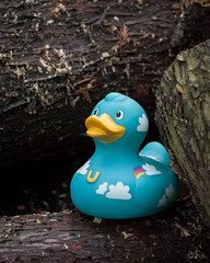A trip with my Lil' Buddy : Here we are! - 2 (Teensy-Weensy Pouchou) Tags: wood trip stilllife cloud expedition garden toys duck rainbow quote bruxelles motto journey destination bud rubberduck silverlining bruxellesmidi lilbuddy