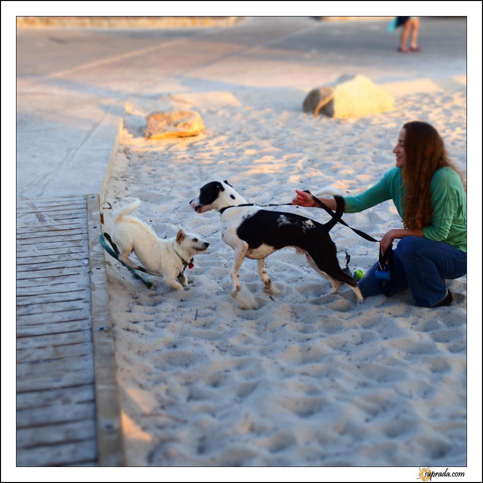 Dogs on Beach - 2