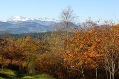 Vista de Picos de Europa desde Monte Corona (Cantabria) (paula_gm) Tags: bosque otoo cantabria comillas montecorona caviedes