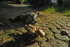 5126a (Fotomouse) Tags: black cat way mushrooms katze pilze schwarz weg fotomouse