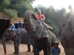Anantara Golden Triangle Elephant Camp