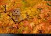 danbo_004 (iskandarbaik) Tags: park uk autumn trees england tree cute home forest toy photography leaf woods bokeh outdoor manga cardboard autumnal yotsuba danbo danbooru revoltech danboard cardbo danboru