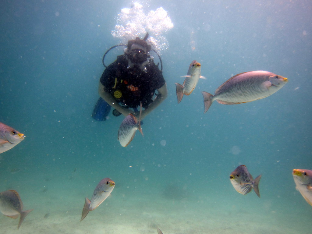 The world 39 s newest photos of breathing and bubbles for How do fish breathe underwater