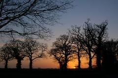 Trees and setting sun (Kirkleyjohn) Tags: trees sunset england sky sun silhouette atardecer treesilhouette evening countryside suffolk sonnenuntergang pôrdosol eastanglia eveninglight coucherdusoleil treesilhouettes treessilhouettes