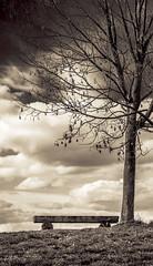 Waiting For Springtime (Imagonos) Tags: tree bench deutschland mood outdoor bank monochrom mainz baum stimmung rheinlandpfalz dslrphotography nikonafsnikkor2470mm128ged