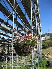 Flowers hanging from bleacher_4630267627_l