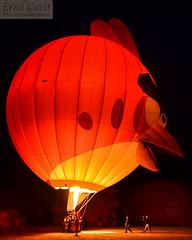 Angry Bird lit up (errolgc) Tags: newzealand bird balloon hamilton universityofwaikato balloonsoverwaikato2014 cameronsphere105n333abangry nightglow2014