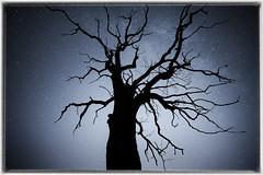 Fractal (MartinFechtner-Photography) Tags: tree dead baum tot ruhr area ruhrgebiet universe fractal fraktal stars sterne night nacht nightscape sky