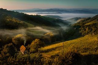 Mist and fog at sunrise light
