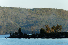 20170302-03-Morning mist at Lake Fanny (Roger T Wong) Tags: australia greatpinetier lakefanny np nationalpark sel70300g sony70300 sonya7ii sonyalpha7ii sonyfe70300mmf2556goss sonyilce7m2 tasmania wha wallsofjerusalem worldheritagearea bushwalk camp hike mist morning trektramp walk