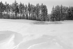 Far, far away (airSnapshooter) Tags: snow trees forest kociewie tomaszewo traces marks śnieg drzewa sun landscape white sunny day blackandwhite blackandwhitelandscape fujiacros kodak analog canoneos30 tamronspaf2875mmf28xrdildasphericalif bw reed pomorskie bwartaward