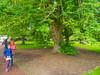 Caucasian wingnut (melastmohican) Tags: wingnut wings sessile foliage walnut season nature polynose leaf juglandaceae whirligig pterocarya catkin plant monoecious leaves seasonal flora caucasian tree fraxinifolia winged nut botanical helicopter green pinnate fruit seed whirlybird edinburgh scotland unitedkingdom gb