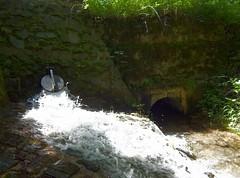 Wasting raw water (Ostravak83) Tags: ostrava nikoncoolpix 2015 léto summer voda water pitnávoda rawwater vodárna oprava watersupply repair studna well vesnice village starábělá vodnízdroj potok creek waterworks