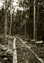 The road that is no more (DameBoudicca) Tags: sweden sverige schweden suecia suède svezia スウェーデン fröreda järedasocken tree träd baum arbre árbol albero 木 road väg weg route camino via 道 forest woods skog wald bosque fôret foresta 森林 forgotten abandoned lost