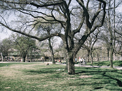 Picnic (max tuguese) Tags: tree picnic spring sony maxtuguese green sun sunshine relaxation outdoor digital nature landscape