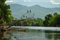 Laguna Manialtepec (432)-2 (Danni Thompson) Tags: travel backpacker mexico october 2015 lagoon wetland bird wildlife