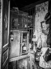 chicken houses (tumivn) Tags: chicken blackandwhite bw monochrome zuiko17mm em10ii saigon vietnam streetphotography street chinatown