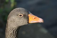 257 (AO'Brien) Tags: arklow wicklow autumn birds