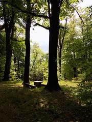 Nel bosco (dina.elle) Tags: bosco sottobosco natura giochi di luce giochidiluce ombre ombra naturally nature aria respirare osservare tranquillità serenità relax area libera fotografare colorinaturali nofilter passeggiata paesaggio panorama veduta