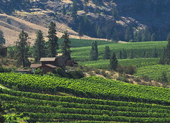 A House in Wine Country - Okanagan Valley, British Columbia (Barra1man) Tags: ahouseinwinecountry grapes vineyard bluemountainvineyard green wine summer okanaganvalley house vines landscape winetour okanagan britishcolumbia canada olympus olympusem1 iso640 lens300mm f5615000