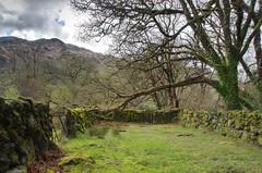 The Auld padd'ck (Rob McC) Tags: lochtrooldumfriesandgalloway scotland alba green paddock moss walls old ancient landscape