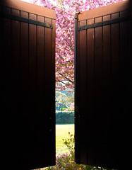 Au petit réveil... (angiiie23) Tags: week14 52project printemps fleurs fenetre douceur reveil spring window happymorning sunny