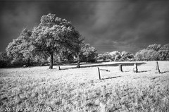 BabyHeadCemetery_Infrared-642 (wanderingYew2 (thanks for 3M+ views!)) Tags: 120 6x9 babyheadcemetery fuji6x9 fujigw690 hillcountry r72filter texas texashillcountry blackandwhite cemetery film filmscan infrared infraredfilm mediumformat