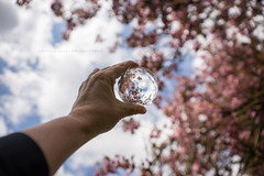 (CarolienCadoni..) Tags: sonyslta99 sal2470z blossom clouds pink dof bokeh crystalball hand creative f7d orbuculum
