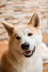 (...Away...) Tags: photo photography photographer pic picture shot shotting nikon dog beautiful akita creative optic capture moment art visual smile happy