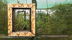 Window on the World (Denis Moynihan) Tags: window frame view plant plants grow growth allotment skerries fingal dublin ireland netting garden gardening nature travel