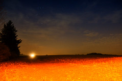 "Day 72/365 - ""Horizon"" (LittleSquirrel27) Tags: 365the2017edition 3652017 day72365 13mar17 horizon night stars light nature landscape colors atnight tree sky"