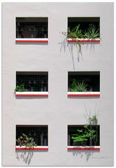 Six-pack - 7115 (willfire) Tags: willfire singapore observation spontaneous spontaneity hdb windows flower plant porch balcony