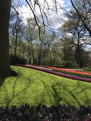 Keukenhof - Tulip Gardens (darrenboyj) Tags: keukenhof flower flowerbed attraction spring netherlands event pretty yearly holland color colour
