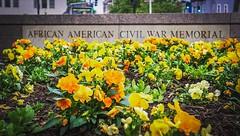 Washington, DC USA  #instaDC #africanamericancivilwarmemorial #ustreet #vermontave #activetransportation