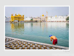 Pilgrimage to the Golden Temple (John Ryland) Tags: goldentemple amritsar india