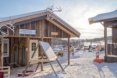 Dogyard at Kirkenes snow hotel (morten f) Tags: kirkenes snow hotel hotell dog hund hundegård winter vinter snø kaldt cold 2017 animal sledding hundekjøring finnmark norge norway dogyard yard
