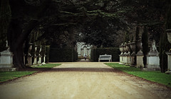 Chiswick House & Gardens - London (Mark Wordy) Tags: chiswickhousegardens london formalgarden urns path hedge pattedoie goosefoot eyecatcher