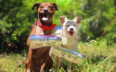 Save The Date (Thanks for over 2 million views!!) Tags: chadsparkesphotography centralflorida canoneosrebelt5 macro macrophotography dog dogs nature savethedate terriermix terrier florida kissimmeeflorida kissimmee